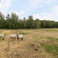 42_landelijk-wonen-friesland-jubbega